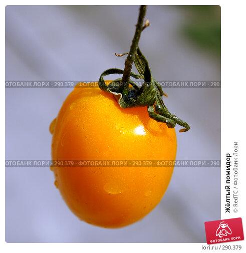 Жёлтый помидор, фото № 290379, снято 19 мая 2008 г. (c) RedTC / Фотобанк Лори