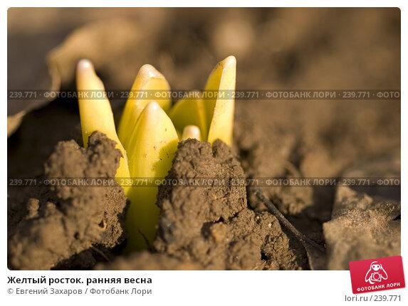 Купить «Желтый росток. ранняя весна», фото № 239771, снято 28 марта 2008 г. (c) Евгений Захаров / Фотобанк Лори