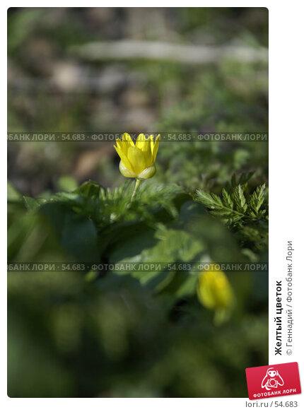 Купить «Желтый цветок», фото № 54683, снято 15 декабря 2017 г. (c) Геннадий / Фотобанк Лори