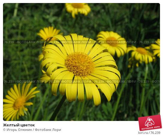 Желтый цветок, фото № 76239, снято 12 июня 2005 г. (c) Игорь Олюнин / Фотобанк Лори