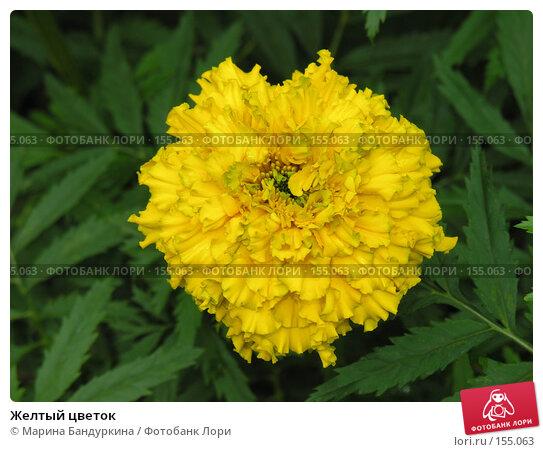 Купить «Желтый цветок», фото № 155063, снято 9 сентября 2006 г. (c) Марина Бандуркина / Фотобанк Лори