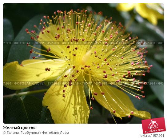 Желтый цветок, фото № 157991, снято 20 июня 2005 г. (c) Галина  Горбунова / Фотобанк Лори
