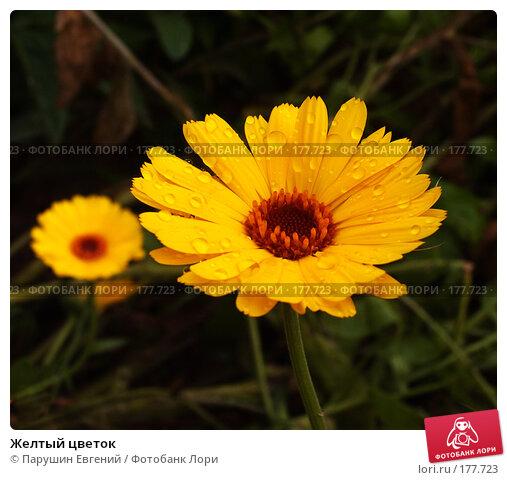 Желтый цветок, фото № 177723, снято 22 октября 2016 г. (c) Парушин Евгений / Фотобанк Лори
