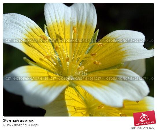 Купить «Желтый цветок», фото № 291027, снято 24 июля 2007 г. (c) sav / Фотобанк Лори