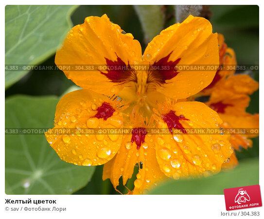 Желтый цветок, фото № 304383, снято 17 июля 2005 г. (c) sav / Фотобанк Лори