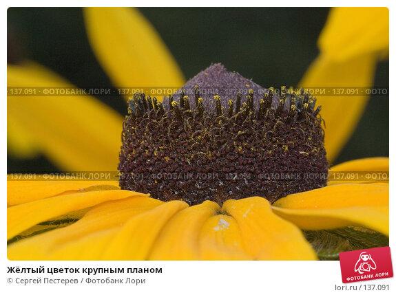 Купить «Жёлтый цветок крупным планом», фото № 137091, снято 17 июля 2007 г. (c) Сергей Пестерев / Фотобанк Лори