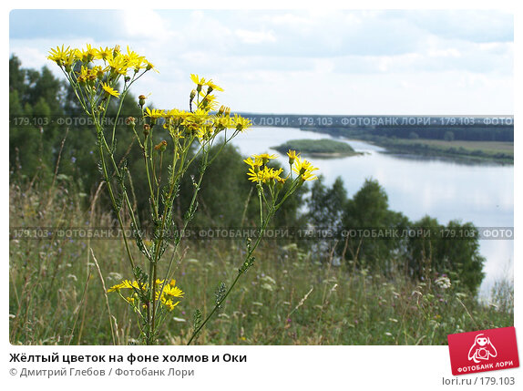 Жёлтый цветок на фоне холмов и Оки, фото № 179103, снято 12 декабря 2004 г. (c) Дмитрий Глебов / Фотобанк Лори