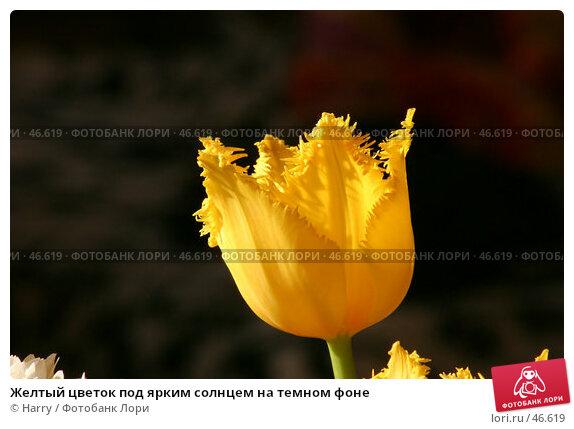 Желтый цветок под ярким солнцем на темном фоне, фото № 46619, снято 28 февраля 2005 г. (c) Harry / Фотобанк Лори