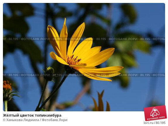 Купить «Жёлтый цветок топинамбура», фото № 80195, снято 4 сентября 2007 г. (c) Ханыкова Людмила / Фотобанк Лори