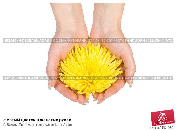 Желтый цветок в женских руках, фото № 132039, снято 30 мая 2007 г. (c) Вадим Пономаренко / Фотобанк Лори