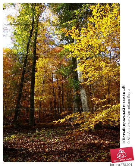 Жёлтый,красный и зелёный, фото № 78091, снято 25 октября 2006 г. (c) Alla Andersen / Фотобанк Лори