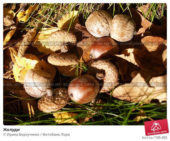 Желуди, фото № 195455, снято 28 октября 2006 г. (c) Ирина Борсученко / Фотобанк Лори