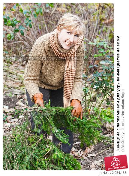 Женщина с лапками ели для укрывания цветов на зиму, эксклюзивное фото № 2934135, снято 6 ноября 2011 г. (c) Майя Крученкова / Фотобанк Лори