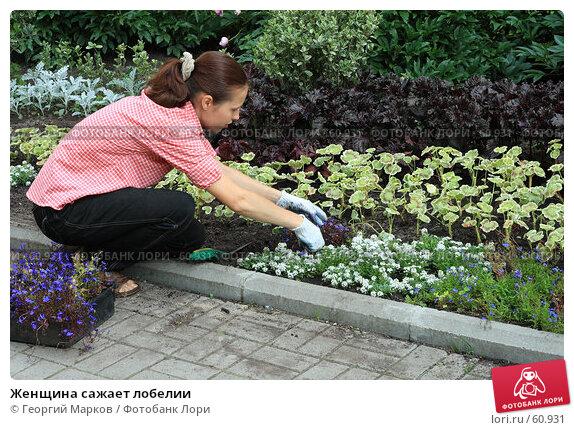 Женщина сажает лобелии, фото № 60931, снято 4 июля 2007 г. (c) Георгий Марков / Фотобанк Лори