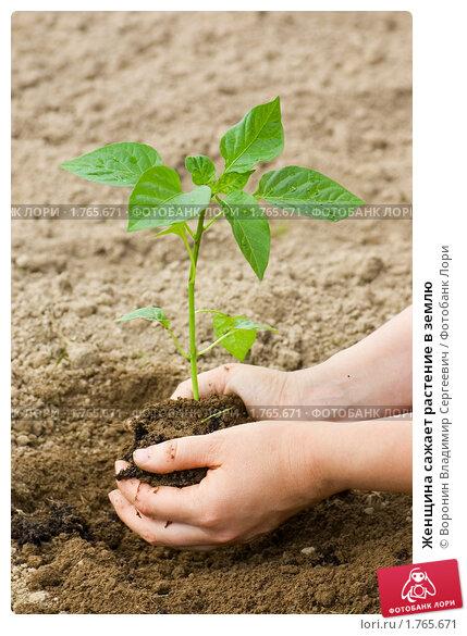 Купить «Женщина сажает растение в землю», фото № 1765671, снято 22 мая 2010 г. (c) Воронин Владимир Сергеевич / Фотобанк Лори