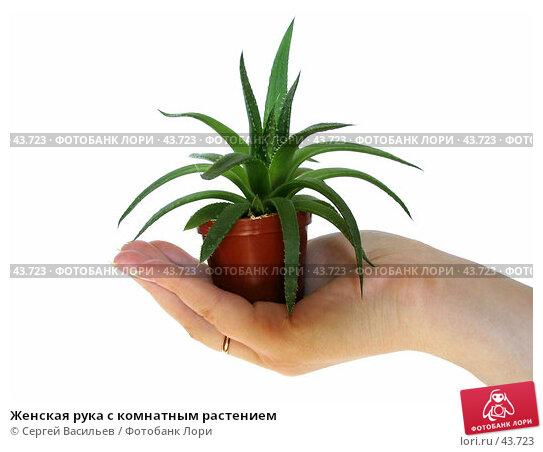 Женская рука с комнатным растением, фото № 43723, снято 13 мая 2007 г. (c) Сергей Васильев / Фотобанк Лори
