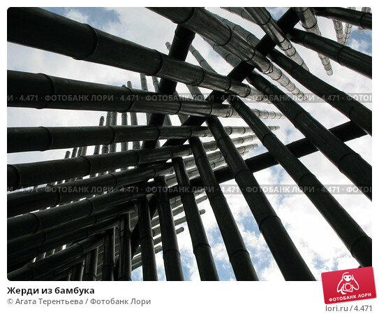 Жерди из бамбука, фото № 4471, снято 21 мая 2006 г. (c) Агата Терентьева / Фотобанк Лори