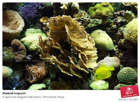 Живой коралл, фото № 121627, снято 12 ноября 2006 г. (c) Арестов Андрей Павлович / Фотобанк Лори
