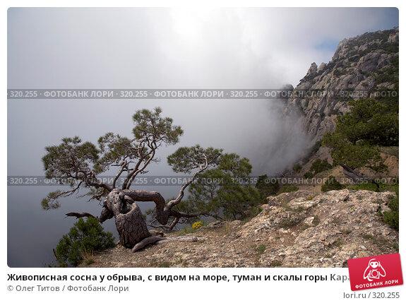 Живописная сосна у обрыва, с видом на море, туман и скалы горы Караул-Оба (Крым), фото № 320255, снято 21 мая 2008 г. (c) Олег Титов / Фотобанк Лори