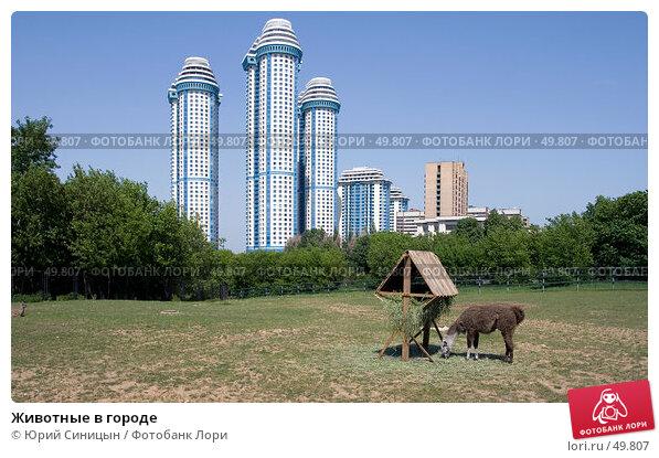 Животные в городе, фото № 49807, снято 28 мая 2007 г. (c) Юрий Синицын / Фотобанк Лори