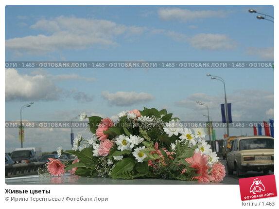 Живые цветы , эксклюзивное фото № 1463, снято 2 сентября 2005 г. (c) Ирина Терентьева / Фотобанк Лори