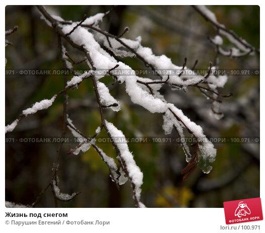 Жизнь под снегом, фото № 100971, снято 22 июля 2017 г. (c) Парушин Евгений / Фотобанк Лори