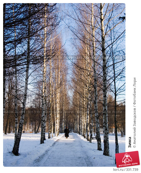 Зима, фото № 331739, снято 15 декабря 2007 г. (c) Анатолий Заводсков / Фотобанк Лори