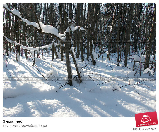 Зима, лес, фото № 226523, снято 12 февраля 2007 г. (c) VPutnik / Фотобанк Лори