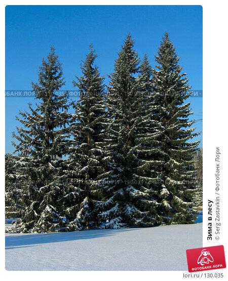 Зима в лесу, фото № 130035, снято 1 декабря 2005 г. (c) Serg Zastavkin / Фотобанк Лори