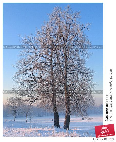 Купить «Зимнее дерево», фото № 183783, снято 25 декабря 2004 г. (c) Юлия Селезнева / Фотобанк Лори