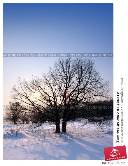 Зимнее дерево на закате, фото № 195735, снято 2 февраля 2008 г. (c) Михаил Коханчиков / Фотобанк Лори