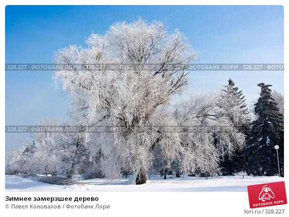 Зимнее замерзшее дерево, фото № 328227, снято 2 февраля 2008 г. (c) Павел Коновалов / Фотобанк Лори