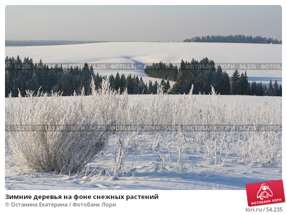 Купить «Зимние деревья на фоне снежных растений», фото № 54235, снято 29 ноября 2006 г. (c) Останина Екатерина / Фотобанк Лори