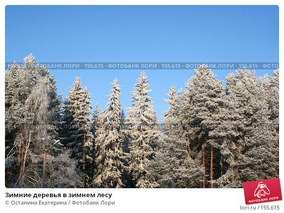 Зимние деревья в зимнем лесу, фото № 155615, снято 10 декабря 2007 г. (c) Останина Екатерина / Фотобанк Лори