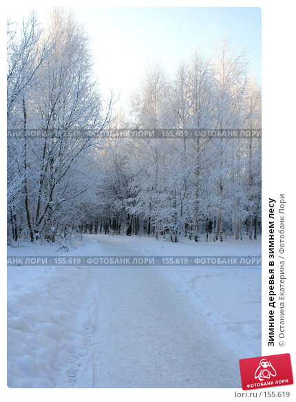 Купить «Зимние деревья в зимнем лесу», фото № 155619, снято 10 декабря 2007 г. (c) Останина Екатерина / Фотобанк Лори