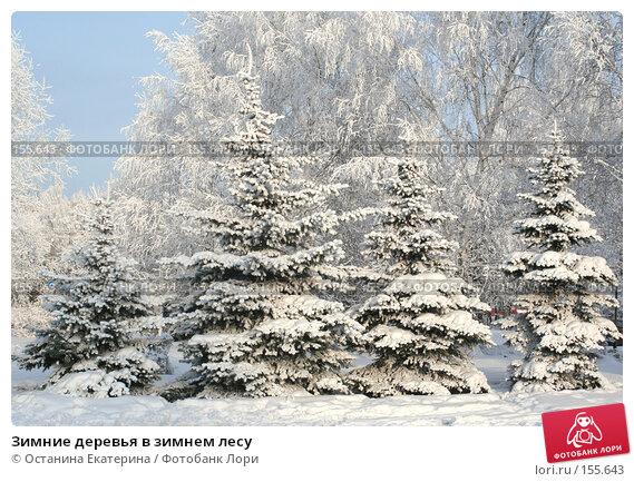 Зимние деревья в зимнем лесу, фото № 155643, снято 13 декабря 2007 г. (c) Останина Екатерина / Фотобанк Лори