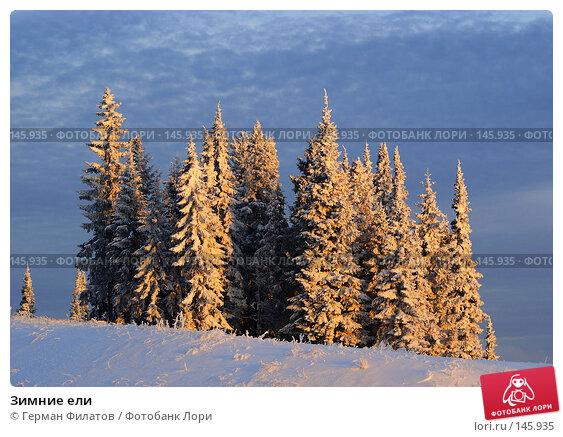 Купить «Зимние ели», фото № 145935, снято 8 ноября 2007 г. (c) Герман Филатов / Фотобанк Лори