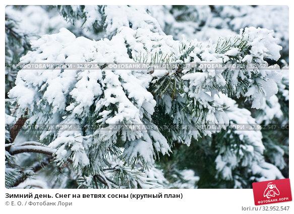 Зимний день. Снег на ветвях сосны (крупный план) Стоковое фото, фотограф E. O. / Фотобанк Лори