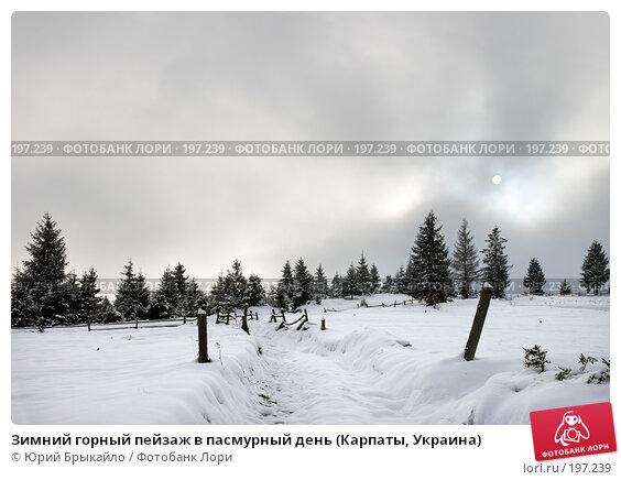 Зимний горный пейзаж в пасмурный день (Карпаты, Украина), фото № 197239, снято 17 ноября 2007 г. (c) Юрий Брыкайло / Фотобанк Лори