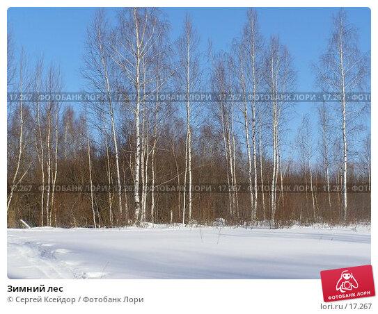 Зимний лес, фото № 17267, снято 21 июля 2017 г. (c) Сергей Ксейдор / Фотобанк Лори
