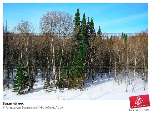 Зимний лес, фото № 75519, снято 4 марта 2007 г. (c) Александр Вальваков / Фотобанк Лори