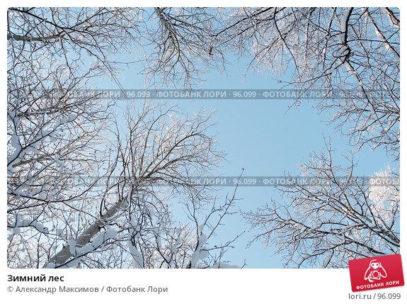 Зимний лес, фото № 96099, снято 31 декабря 2005 г. (c) Александр Максимов / Фотобанк Лори