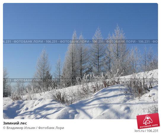Купить «Зимний лес», фото № 106231, снято 15 октября 2007 г. (c) Владимир Ильин / Фотобанк Лори