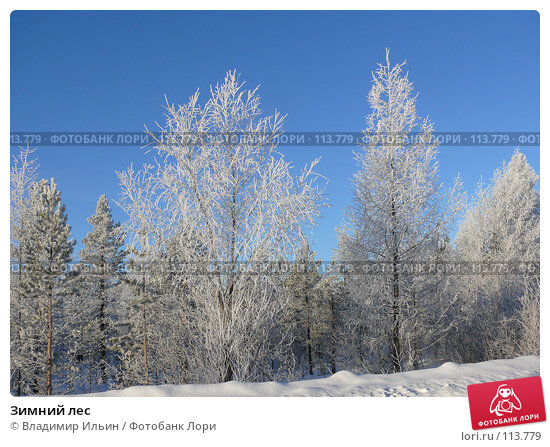 Зимний лес, фото № 113779, снято 9 ноября 2007 г. (c) Владимир Ильин / Фотобанк Лори