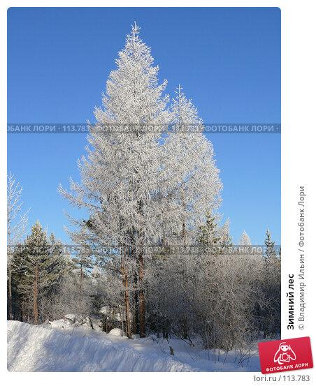 Зимний лес, фото № 113783, снято 9 ноября 2007 г. (c) Владимир Ильин / Фотобанк Лори