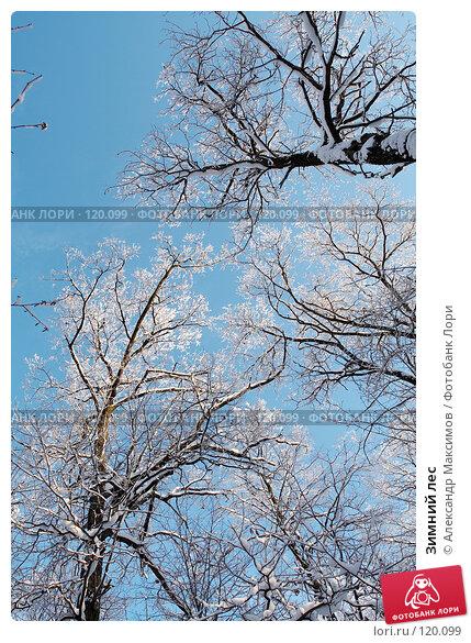 Купить «Зимний лес», фото № 120099, снято 31 декабря 2005 г. (c) Александр Максимов / Фотобанк Лори
