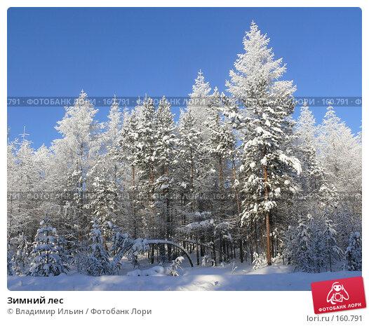 Зимний лес, фото № 160791, снято 24 декабря 2007 г. (c) Владимир Ильин / Фотобанк Лори