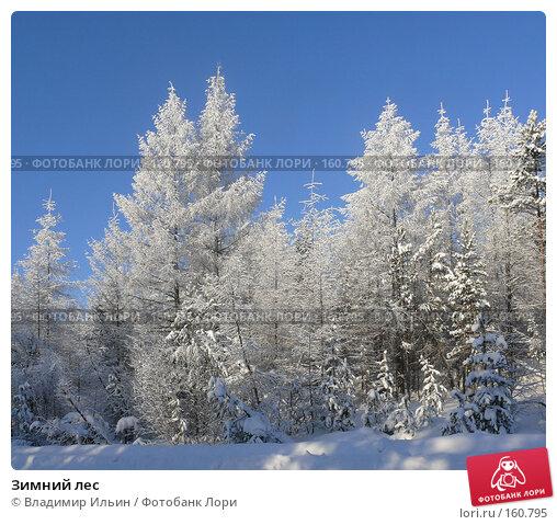 Зимний лес, фото № 160795, снято 24 декабря 2007 г. (c) Владимир Ильин / Фотобанк Лори