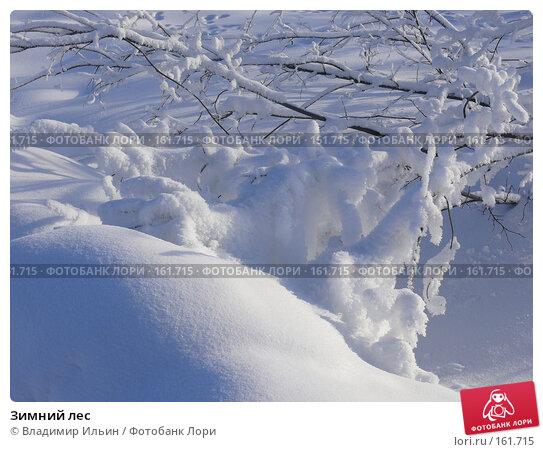 Зимний лес, фото № 161715, снято 24 декабря 2007 г. (c) Владимир Ильин / Фотобанк Лори