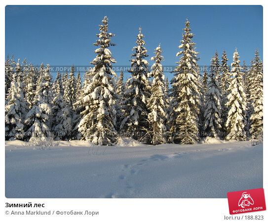 Зимний лес, фото № 188823, снято 27 января 2008 г. (c) Anna Marklund / Фотобанк Лори